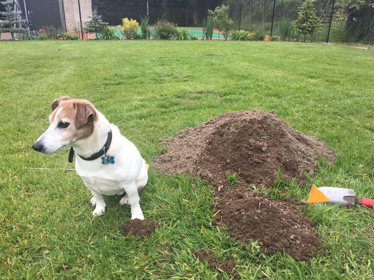 Digging deep and catching a live mole!