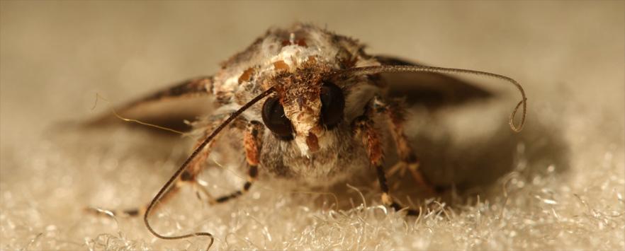 Carpet Moth Control Norfolk