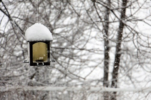 Winter – Pests To Be Aware Of