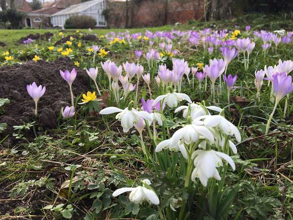 Spring Flowers And Mole Hills Reepham